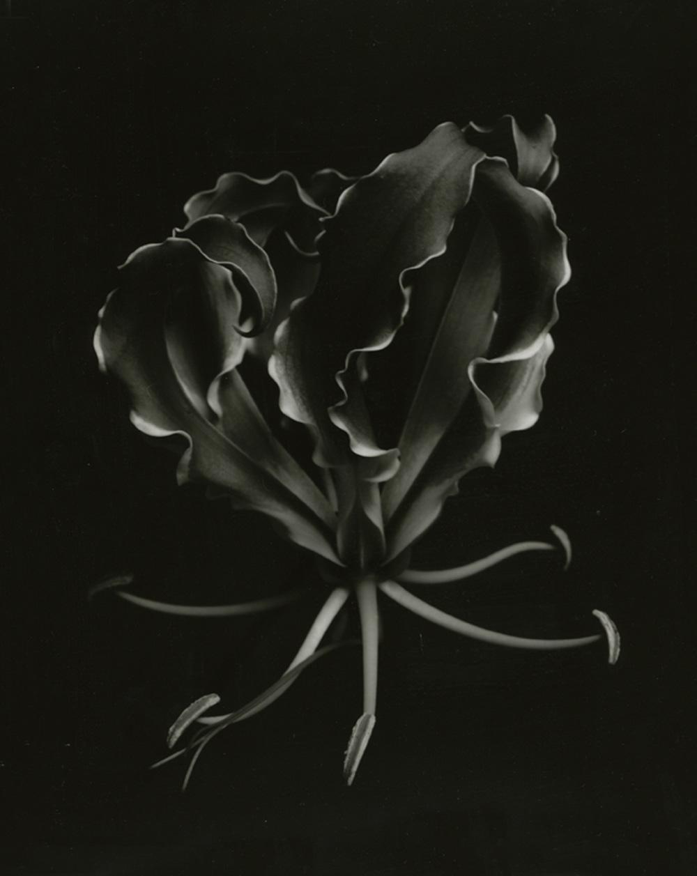 myth9_flower